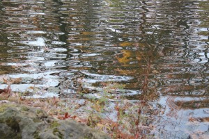 Reflections  Photograph by Cathie Horrell
